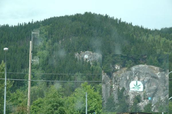 Terrace cannabis leaf
